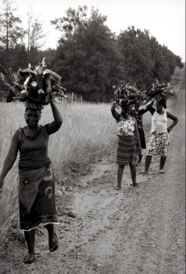 village femmes champ bininga zen afub dzal afrique