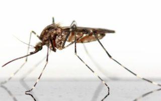 DZALEU.Com : African Lifestyle Magazine – Afrique santé : vaccin anti-paludisme au Kenya